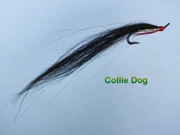 Collie Dog Locals Dibble A Variant Tied On A Plastic Tube