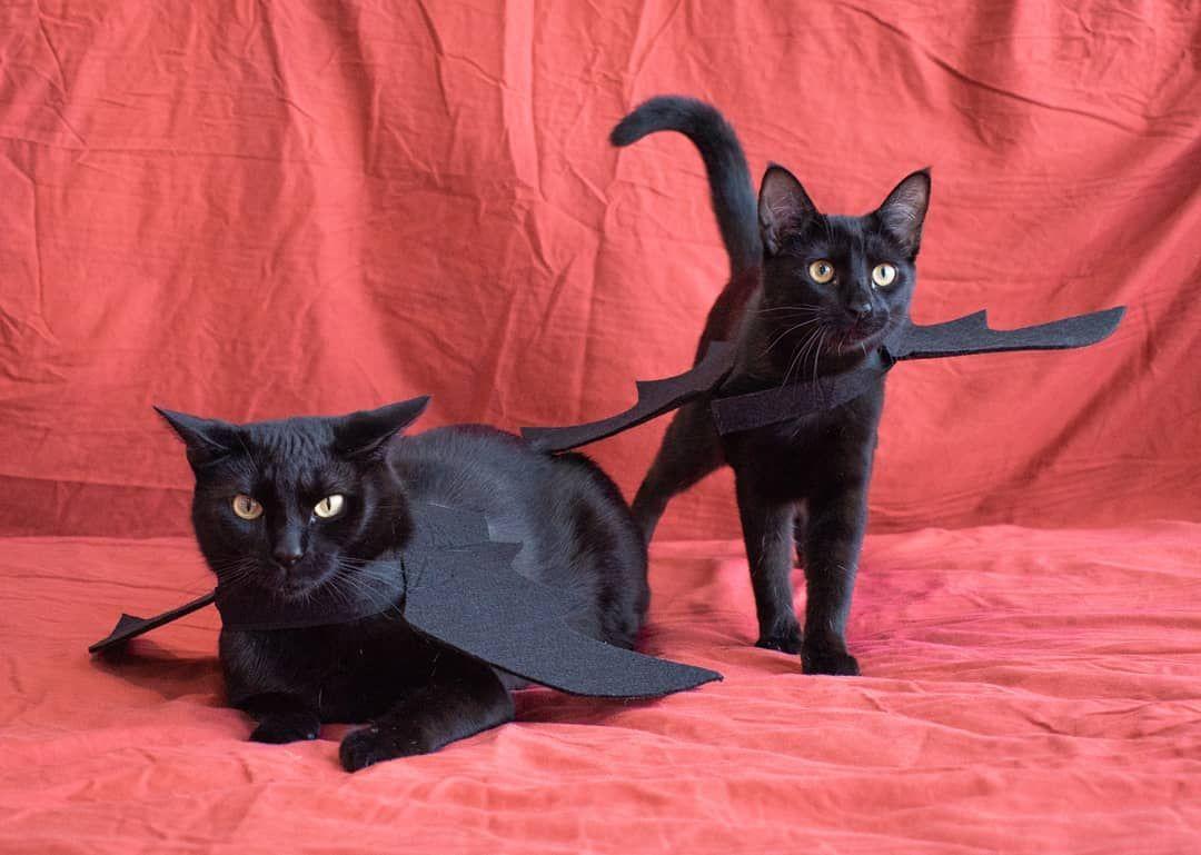 The Batcats Happy Halloween Blackcat Halloween Cat