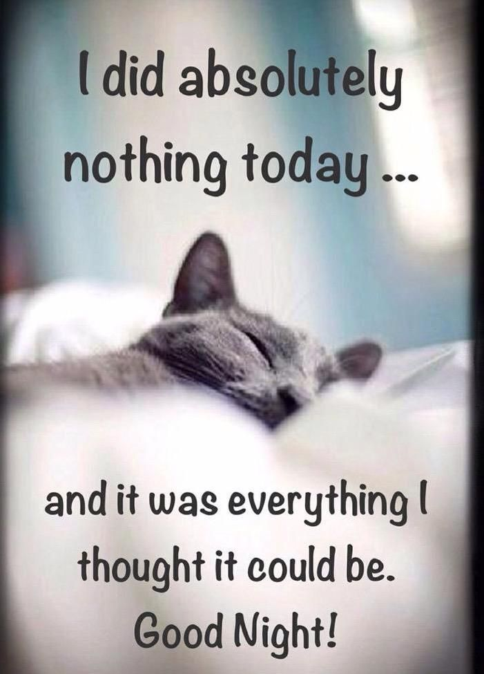 Lady MJ on Twitter | Good night funny, Funny good night quotes, Good night quotes