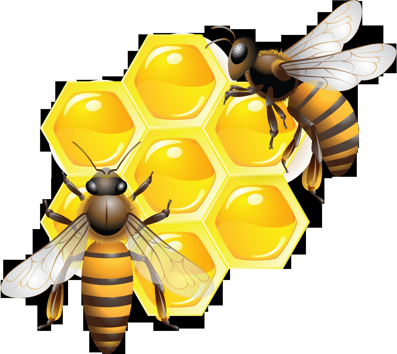 Honey Transparent Image Bee Pictures Bee Pictures Art Bee Art