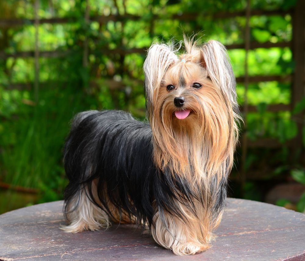 The 10 Stinkiest Dog Breeds Ingrid Birch S Woofs N Wagspiration