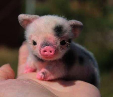 Outstanding > Cutest Animals Ever List follow Cute