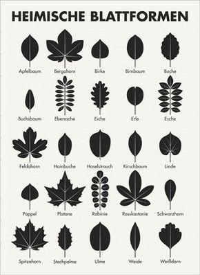 Erkennen laubbaum blätter Blattformen: Übersicht