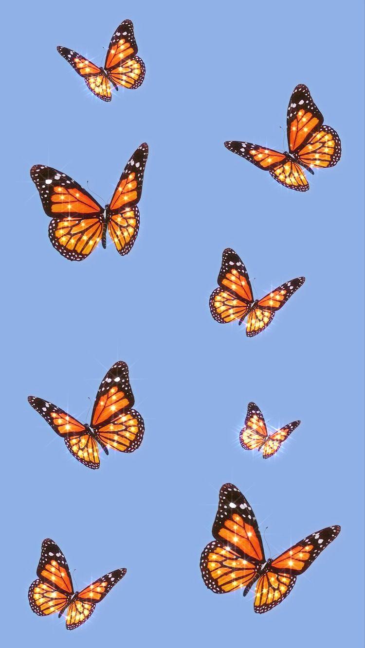 Butterfly wallpaper #wallpaper#butterflies#asthetic# ...