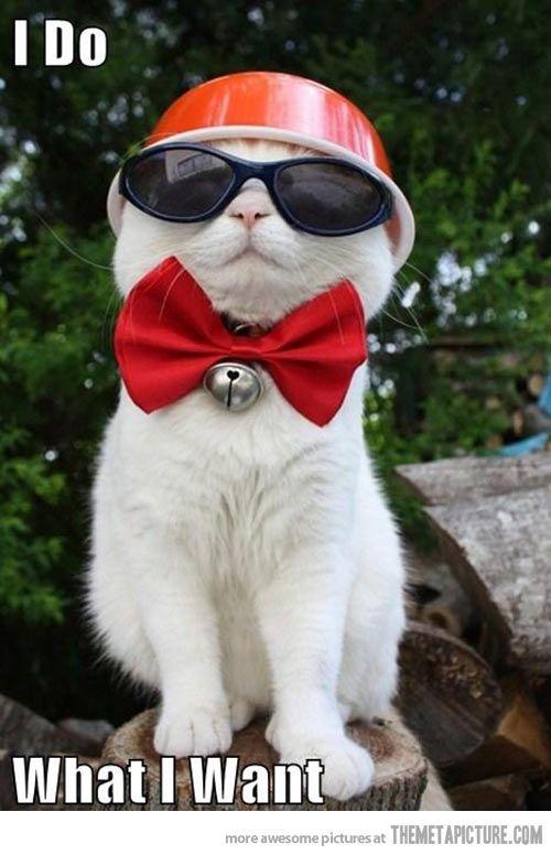 Fancy cat doesn't care…