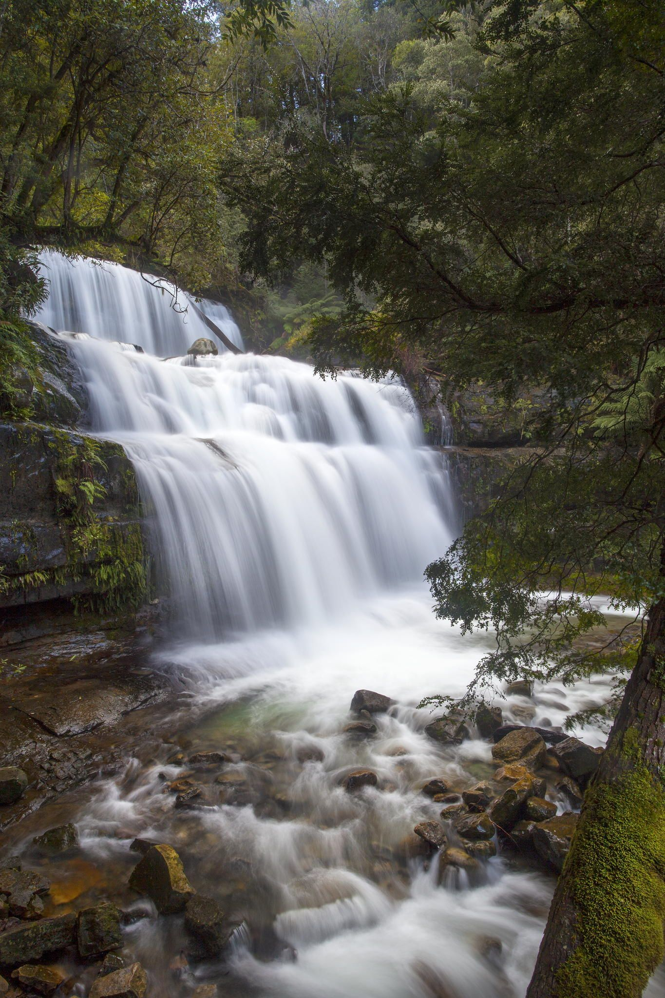 The Last Liffey Falls Tasmania Liffey