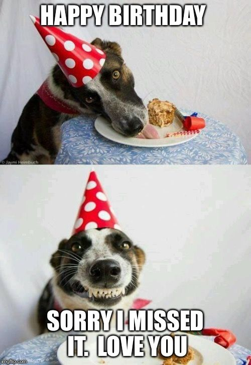 Birthday Dog Party Funny Animals Dogs