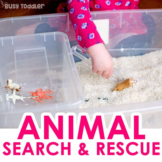 animal search toddlers