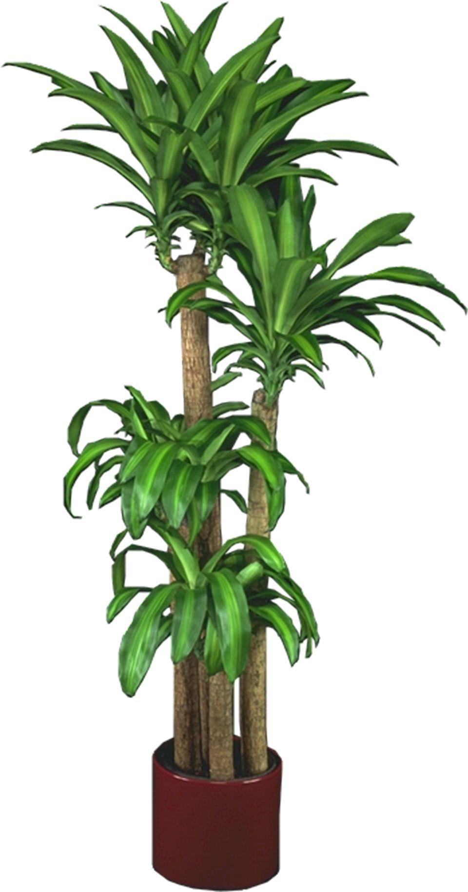 Best Kitchen Gallery: Low Light Plants Indoor Plants House Plants House Plants of Tropical Indoor House Plants  on rachelxblog.com