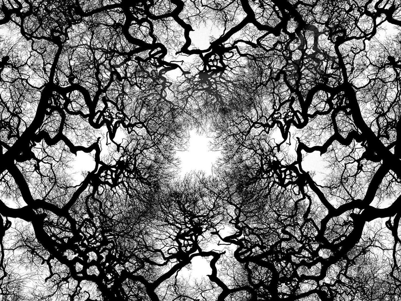 wallpaper trees, nature, upward view, black and white