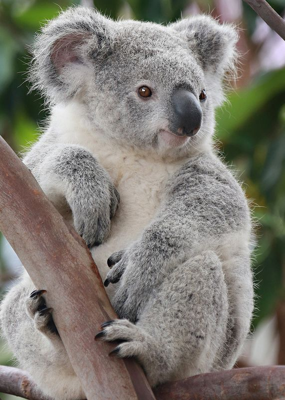 Happy Thanksgiving in 2020 (With images) Cute koala bear