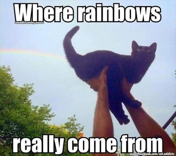 Where Rainbows Really Come From Animal Jokes Funny Cat Memes Funny Animal Quotes