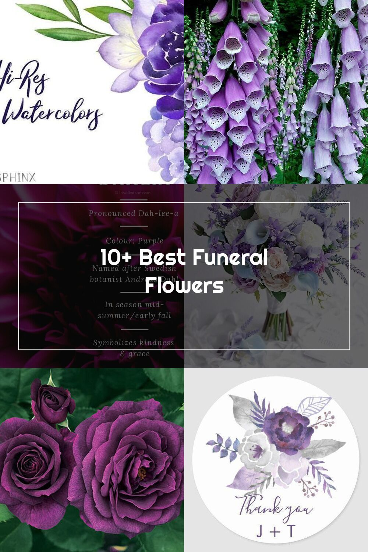 Funeral Flower Meaning Purple dahlias, like pink dahlias