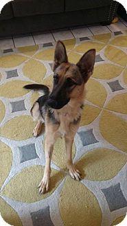 German Shepherd Dog Dog For Adoption In Racine Wisconsin Heidi