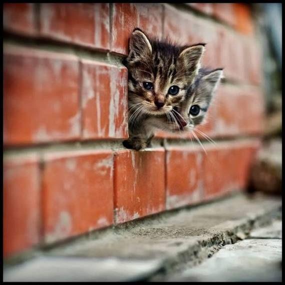 Los gatos, son animales bonitos, pero no me gustan mucho. Esta foto es preciosa