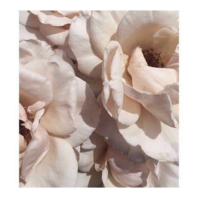 x . . . . . #bellamummablooms #flowers #flower #petal #petals #nature #beautiful #love #pretty #blossom #sopretty #flowersofinstagram #flowerstyles_gf #flowerslovers #flowerporn #bride #floral #florals #flowermagic #instablooms #bloom #blooms #botanical #floweroftheday #love #rose