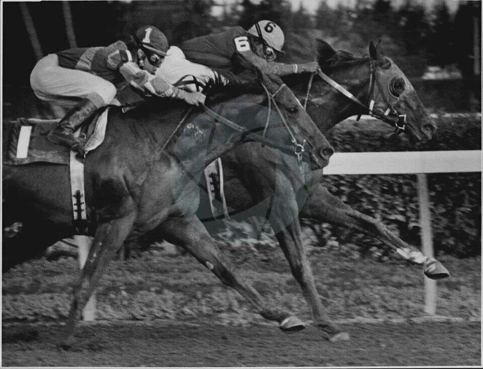 Alydar winning over Believe It Saratoga horse racing