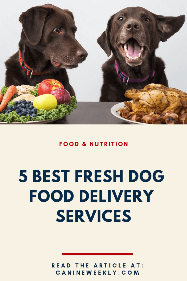 7 Best Fresh Dog Food Delivery Services for 2020 Dog