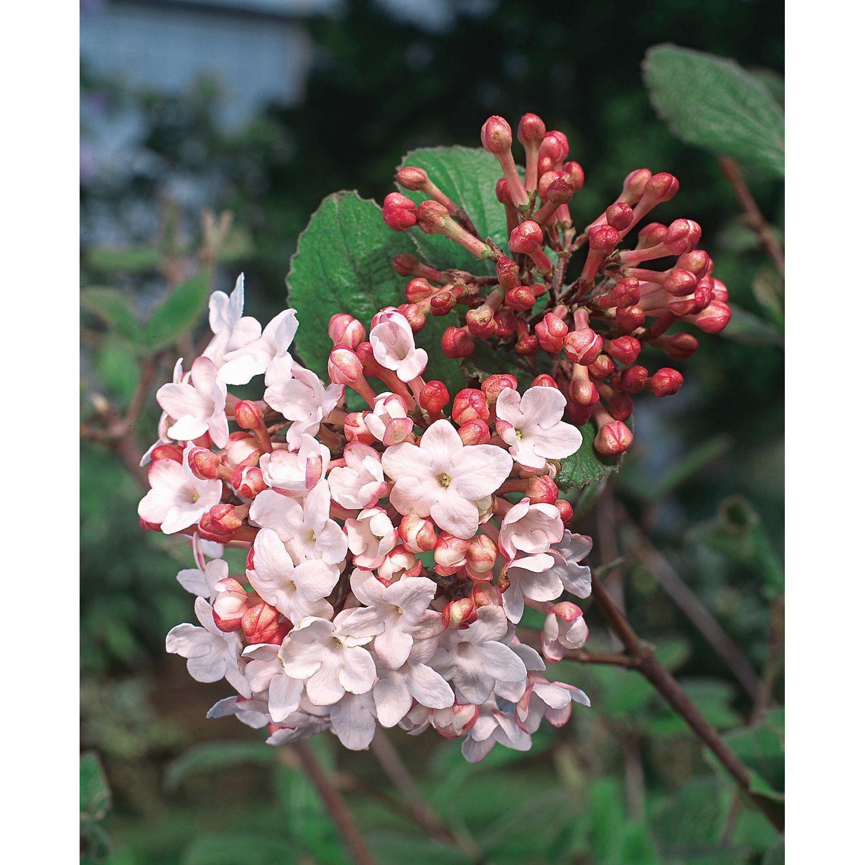 Https Images Obi De Product De 1500x1500 308850 3 Jpg Plants