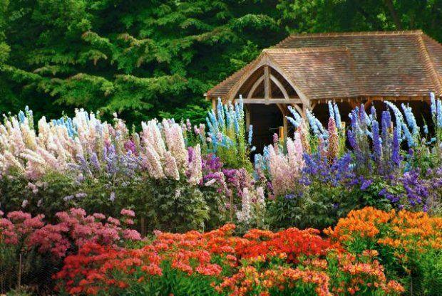 Najwieksze Byliny Olbrzymy Na Rabacie Garden House Styles Plants