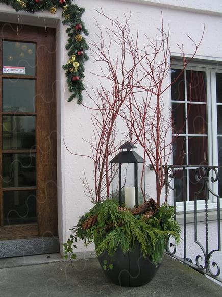 Advent-Pflanzen                                                       … #herbstdekoeingangsbereichdraussen
