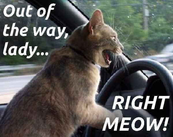 You Funny Lady Meme : You drive me crazy cat lady pinterest meme