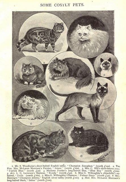 Louis Wain illustration by ElfGoblin, via Flickr