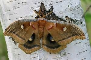 Yahoo! Image Search Results for moths