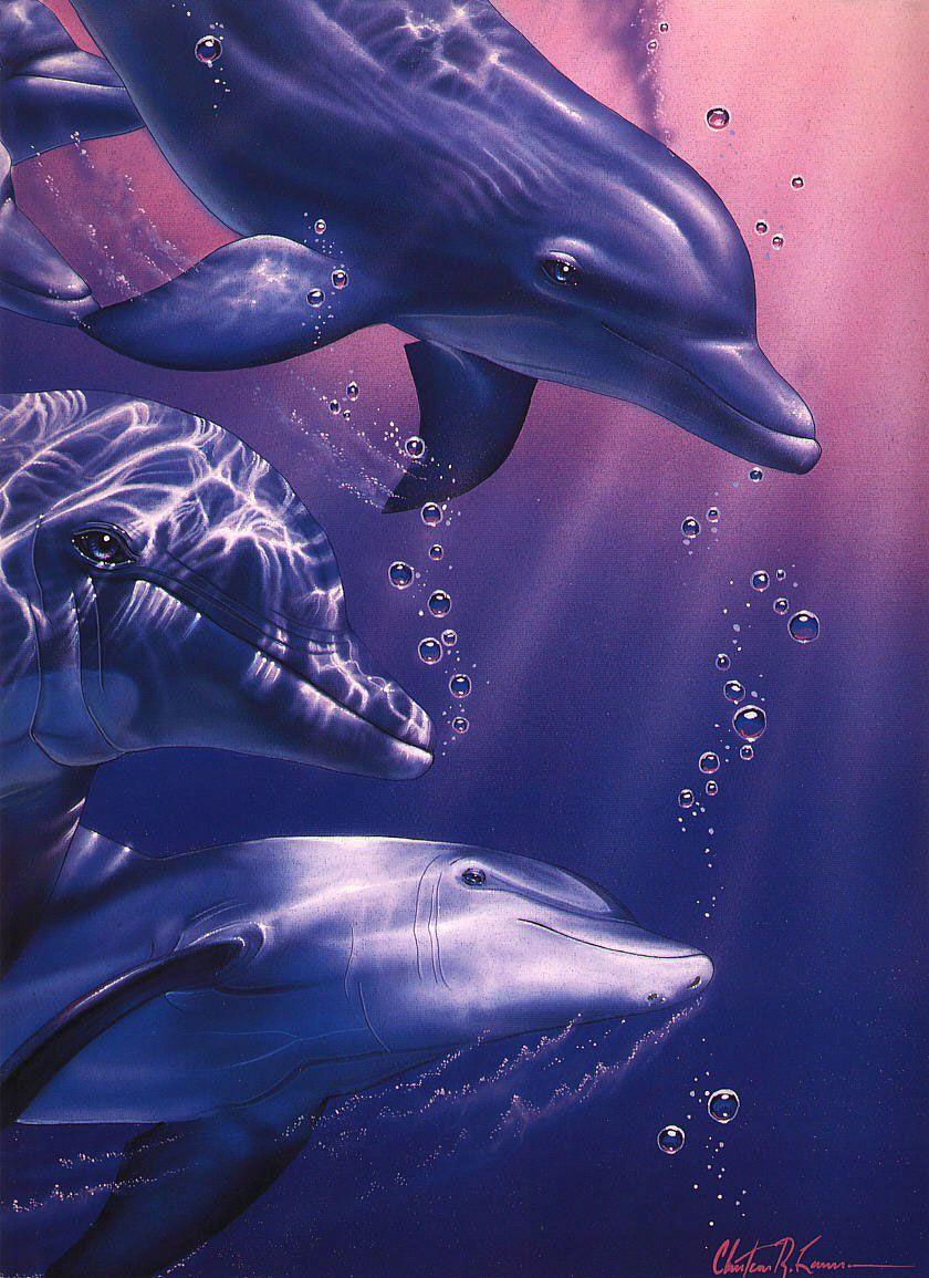 фото и рисунки дельфинов узнать любопытные