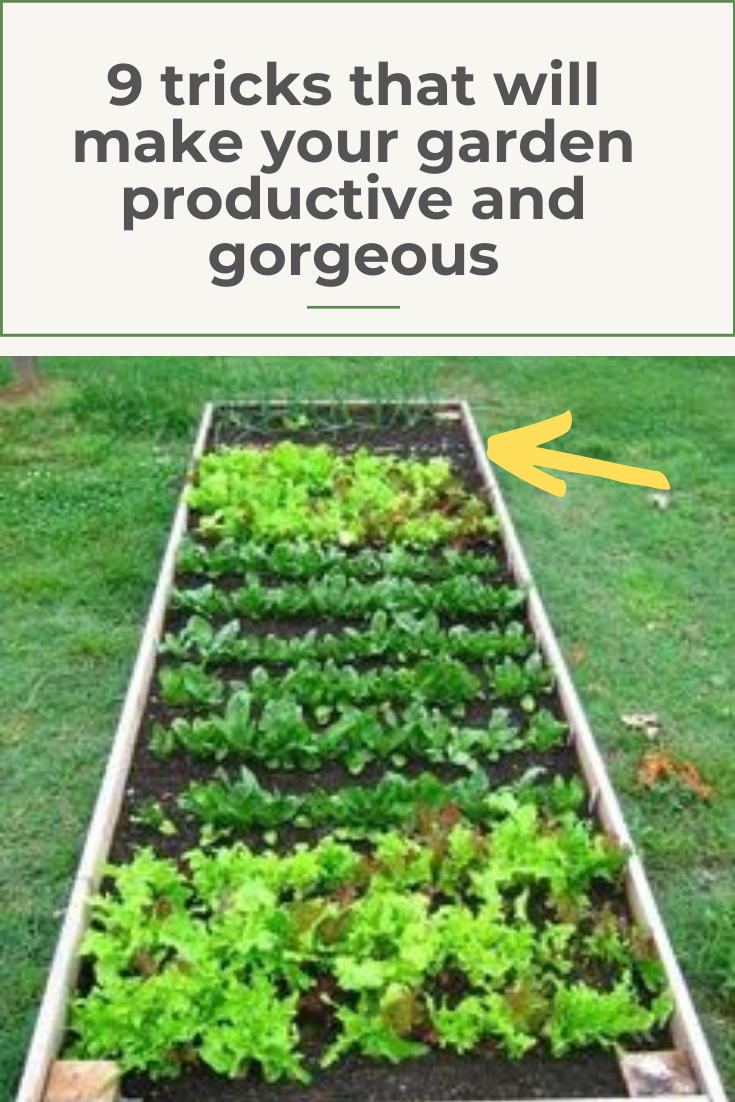 19 Simple Gardening Tips For Creating A Gorgeous And Productive
