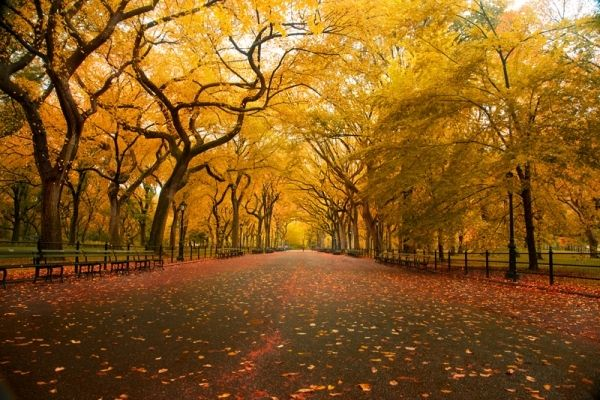 Image result for Autumn Tree Tunnel, USA
