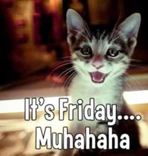 Tgif Cat Images | www.pixshark.com - Images Galleries With ...