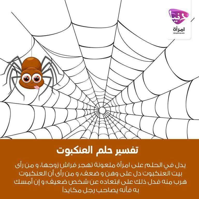هل حلمت يوما عن العنكبوت لهذا الحلم وأردت تفسيرا له إليك تفسيره دنيا امرأة تفسير أحلام حلم تفسير الأحلام الأحلام كويتي دبي اﻻمارات السعوديه قط