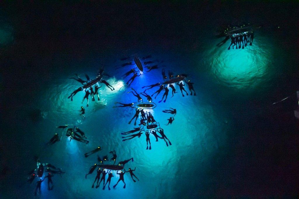 Night Manta Ray Dive Hawaii Pictures Big Island Hawaii Hawaii