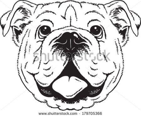 Drawn Bulldog Face 5 Animal Sketches Bulldog Art Animal Drawings