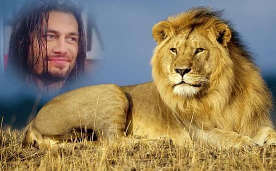 Roman le lion de la wwe