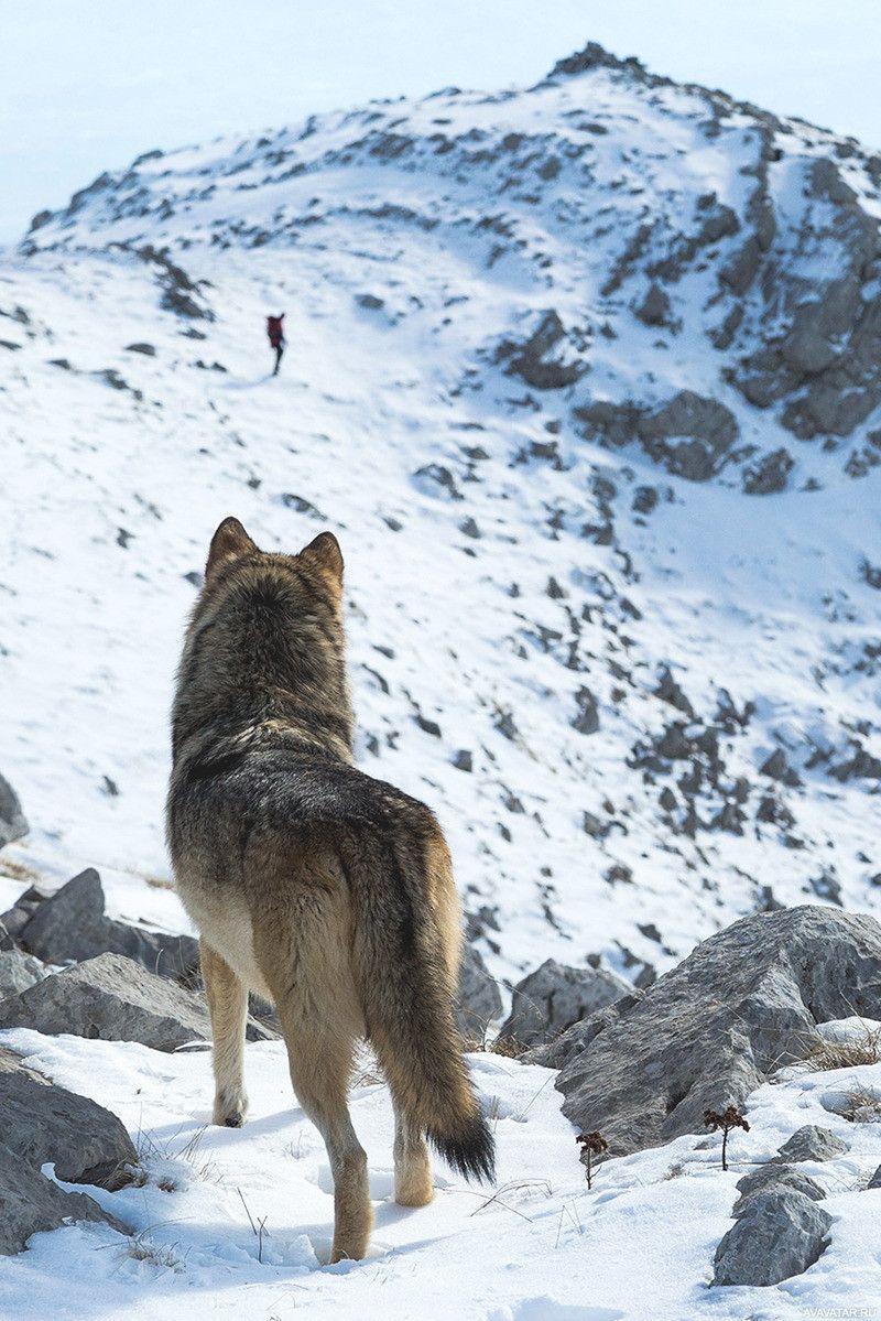 правлении османской картинки уходящего волка облегчения земляных