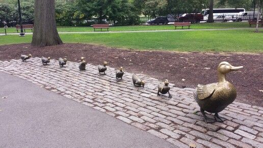 Make way for ducklings @Boston Common