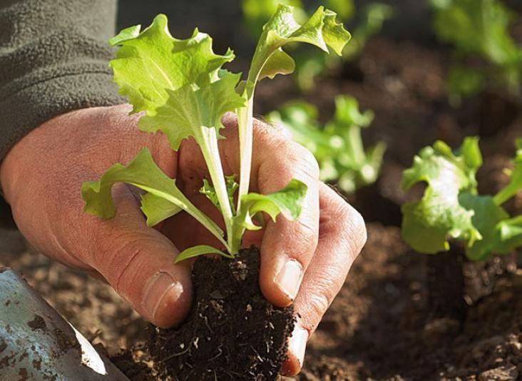 les plantations du mois de mars au jardin jardin pinterest planters vegetable garden et. Black Bedroom Furniture Sets. Home Design Ideas