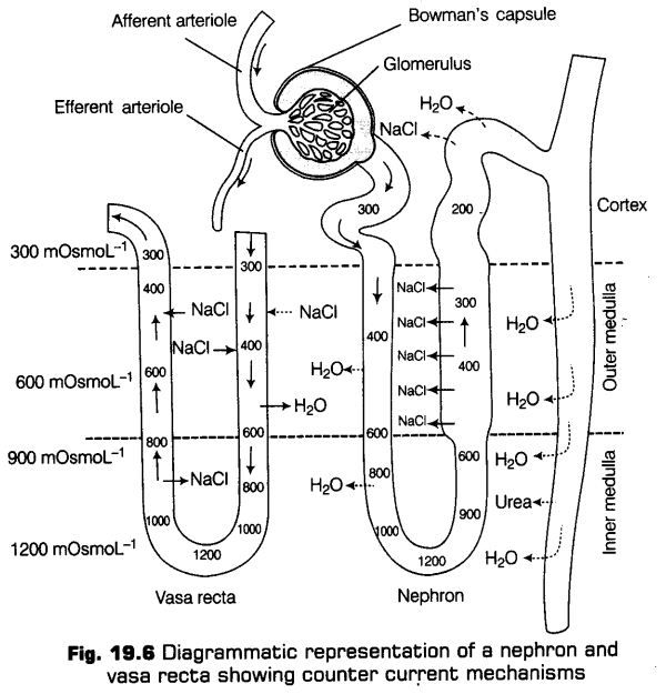 excretory-products-and-their-elimination-cbse-notes-for