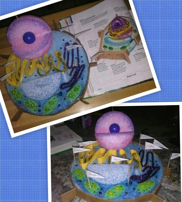 My sons science project...3D plant cell model | 3d cell ...