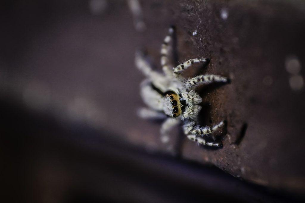 Fondo de Pantalla de Insecto, Araña, Arácnido, Espeluznante, Miedo ...