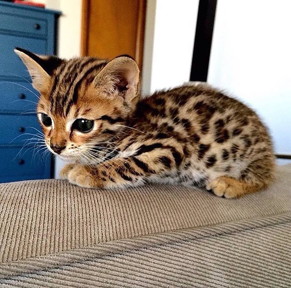 Things That Make You Say Awwwww Table Talk Drivewesaid Kittens Cutest Cute Baby Animals Cute Animals