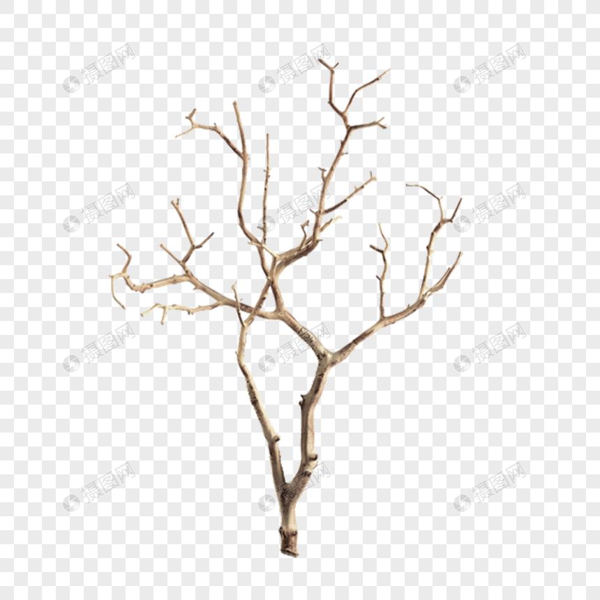 Dead Tree Branch Dead Branches Dead Branches Branches Trees Dry Branches Winter Tree Branches Dry Branch Image