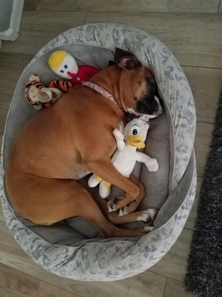 Nap Time Dog Toys Boxer Puppies Boxer Dogs Funny