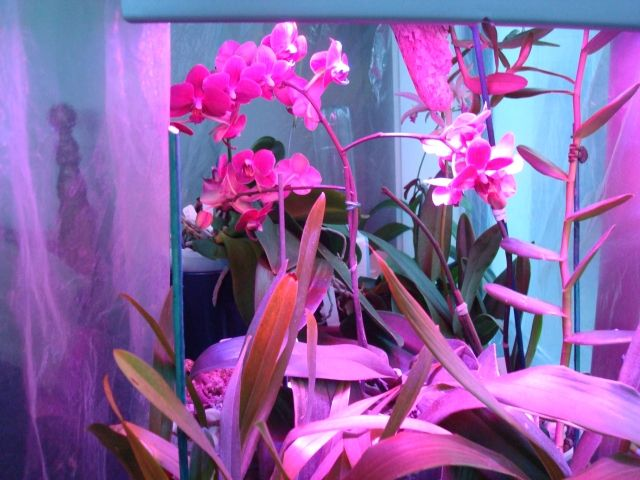 Pin By Lamppedia On Led Grow Lights For Indoor Plants 400 x 300