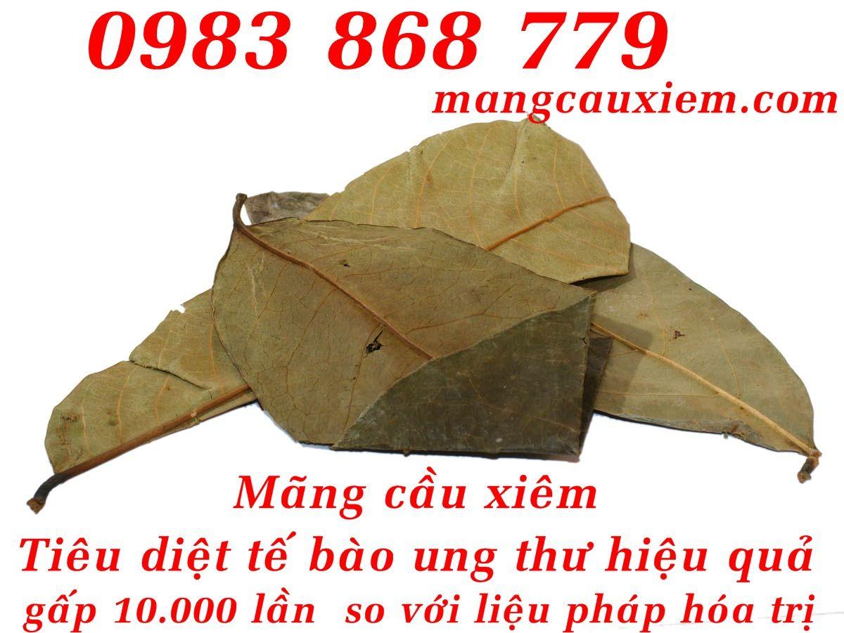 Toàn Quốc - Cây Nở ngày đất l Thần dược chữa Gout trong 7 ngày http://caynongaydat.vn http://caychumngay.com http://caychumngay.com.vn http://caychumngayvn.com http://mangcauxiem.com http://mangcauxiem.com.vn