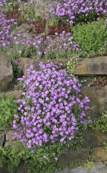 Natursteinmauern farbenfroh bepflanzen | Bepflanzung, Richtiger und ...
