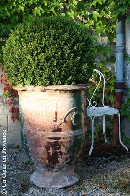 Boule de buis dans une ancienne jarre d'Anduze Les Enfants de Boisset