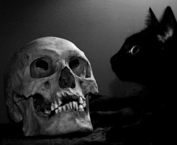 Black cat, skull